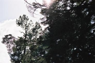 cragside-(18)