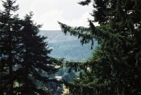 cragside-(9)