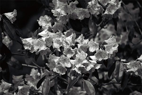 plant-(3)