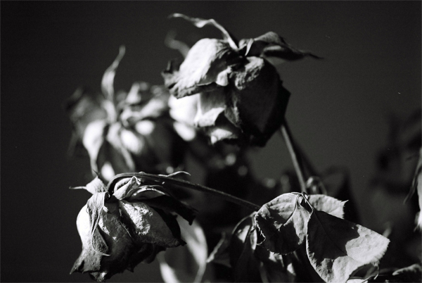 decay-flowers-(6)