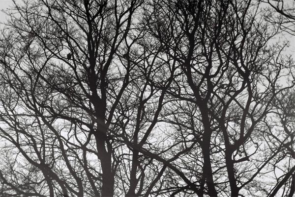 trees-00025