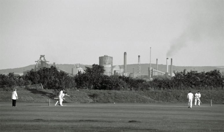 cricket36