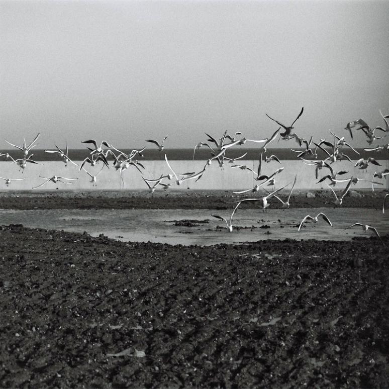 seagulls-(2)