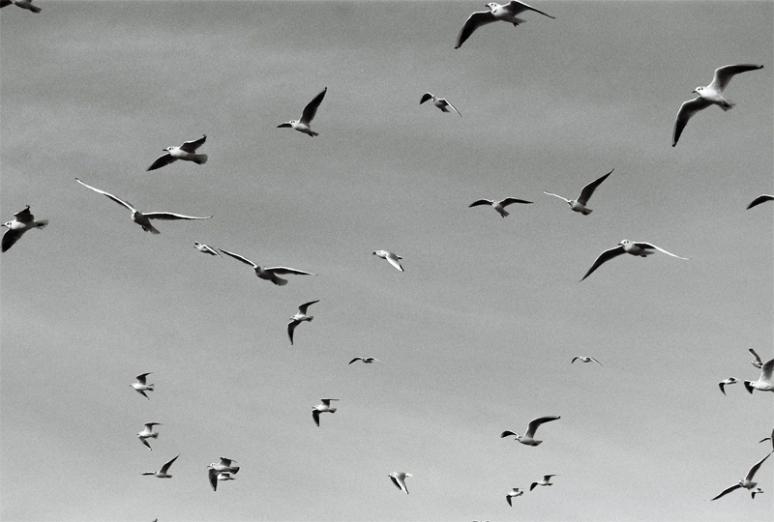 seagulls-(3)