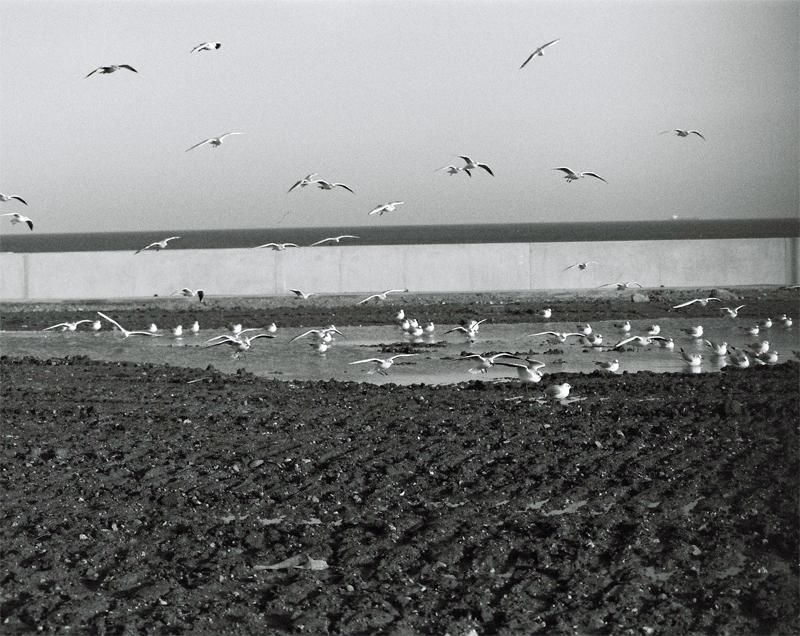 seagulls-(4)