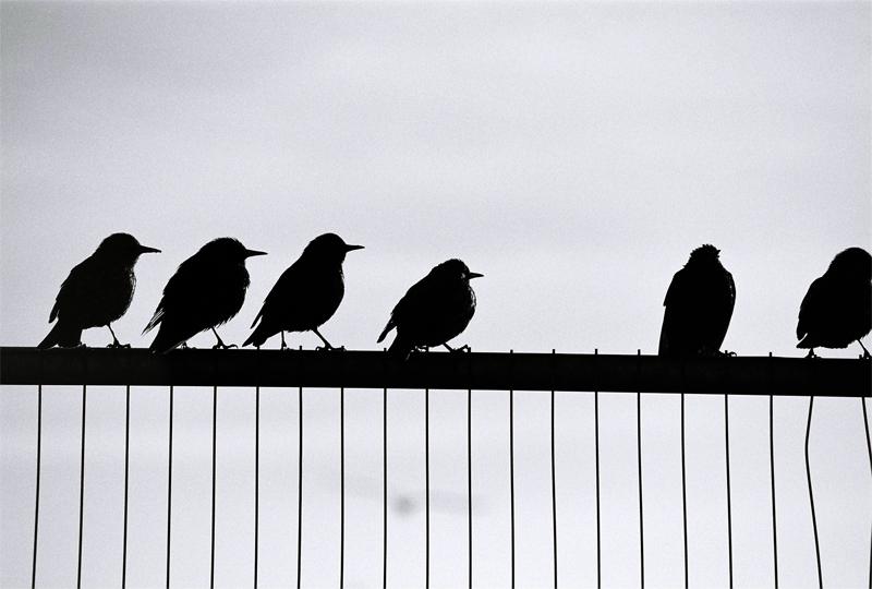 seagulls-(5)