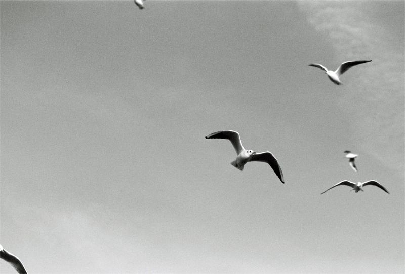 seagulls-(6)