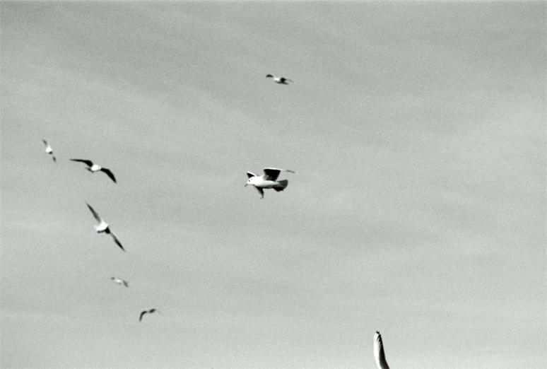 seagulls-(7)