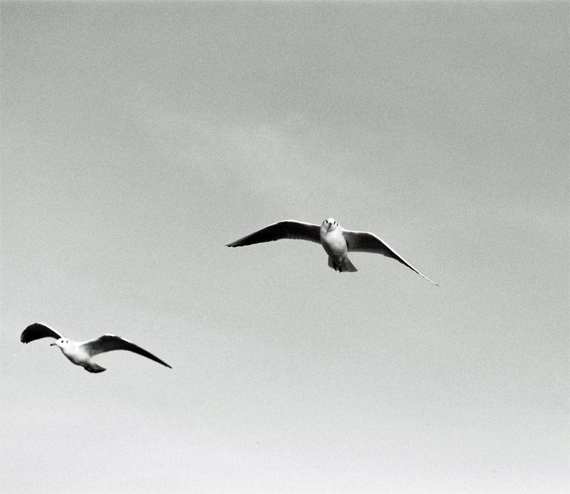 seagulls-(8)