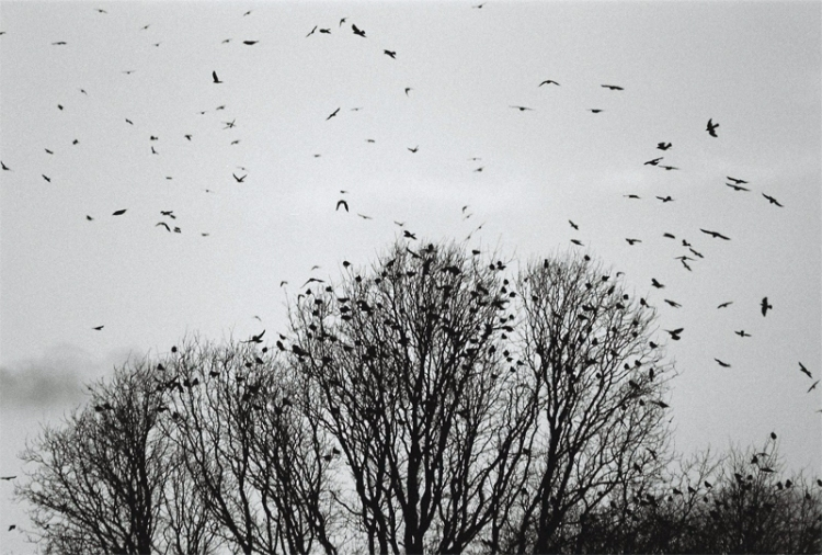 Trees-and-Birds-(1)