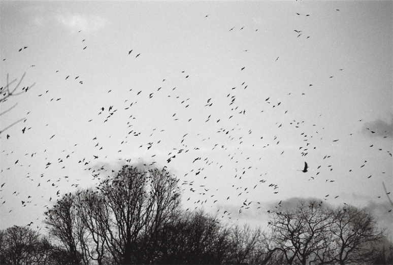 Trees-and-Birds-(3)