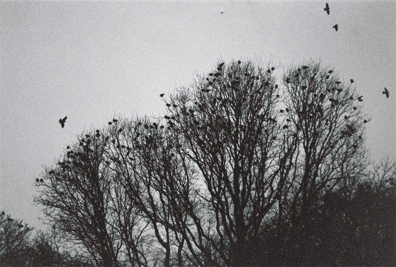 Trees-and-Birds-(4)
