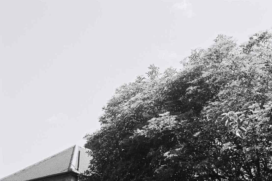 Infra Red Tree
